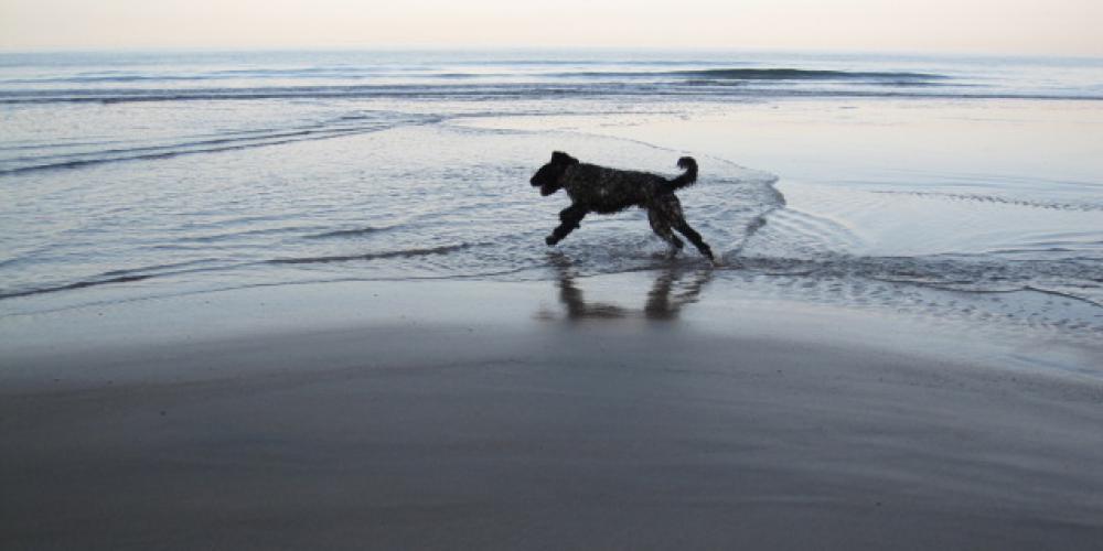 Monty at Brook Beach